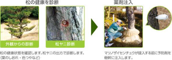 害虫駆除、毛虫、ナメクジ、松くい虫対策は、ダスキン高畑トータルグリーンへ 名古屋市全域対応します。